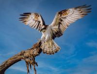 Sake Startup übernimmt Schutz von 20.000 Quadratmetern im Brandenburger Naturparadies