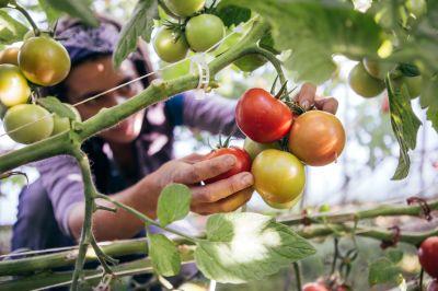 Schafwoll-Pellets und der praktische Einsatz in der Bio-Gärtnerei
