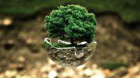 SMART schützt Natur.