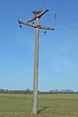 Artenschutz: E.DIS hat einen Nistplatz für Fischadler auf einem Mast an seinem Stromnetz errichtet.