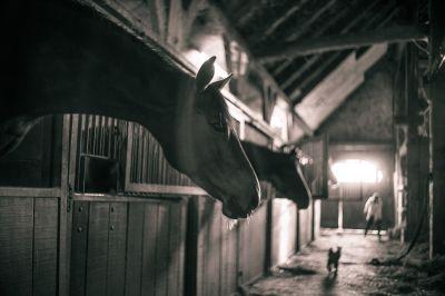 hochwertigen PVC Streifenvorhängen für Pferdeställe