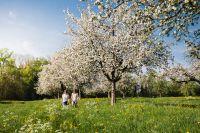 Egnach_Bluescht © Medienstelle-Thurgau-Tourismus