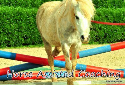 Horse Assisted Coaching: VorPferdsgang für Führungskräfte