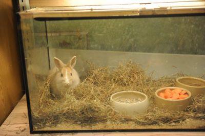 Deutscher Tierhilfe Verband e.V. überzeugt Eigentümer von Berlins traurigster Zoohandlung, den Tierhandel aufzugeben