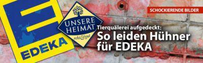 """Deutsches Tierschutzbüro deckt auf: Tierquälerei für Edeka-Edelmarke """"Unsere Heimat"""""""