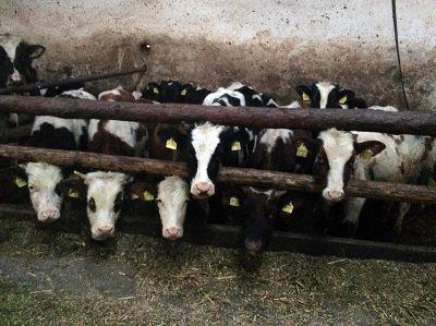 Deutsches Tierschutzbüro: Erst öffentlicher Druck lässt Veterinäramt Gießen handeln