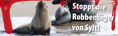 Seehund-Abschuss in Schleswig-Holstein: Deutsches Tierschutzbüro fordert Novellierung des Jagdrechts – Rechtliche Schritte gegen S