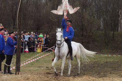 Deutsches Tierschutzbüro hat Erfolg: Gänsereiten in Zukunft ohne echte Gans