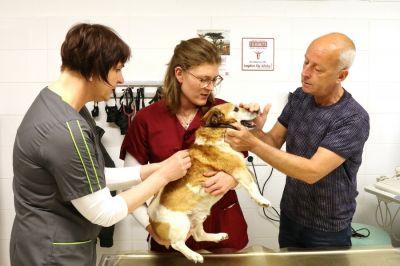 Mit dem Impfen ihrer Tiere leisten Tierhalter*innen einen wichtigen Beitrag zur Tollwutbekämpfung.