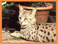 savannahcat.de