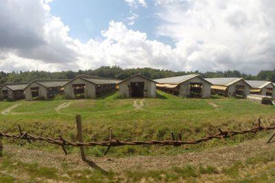 Letzte Nerzfarm in Sachsen-Anhalt steht vor dem Aus