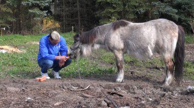 Pony festgekettet – Deutsches Tierschutzbüro e.V. erstattet Anzeige (Quelle Deutsches Tierschutzbüro e.V.)