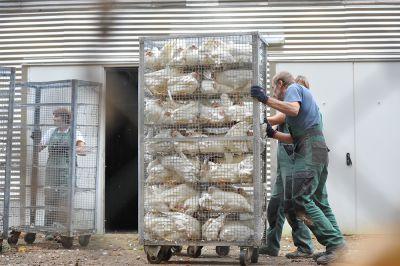 Deutsches Tierschutzbüro deckt Tierquälerei bei Landkost auf