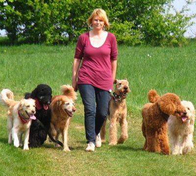 Claudia Nüsser zeigt wie es geht. Spaziergang mit einem ganzen Rudel Hunde.