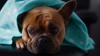 Wie bereiten sich Hundebesitzer auf eine Quarantäne vor? © Mylene2401 / pixabay