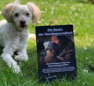 Die Basics der Hundegesundheit