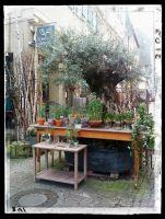 Gärtnerei Greiner - Unser Olivenbaum
