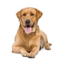 kostenlose Hundefutterproben