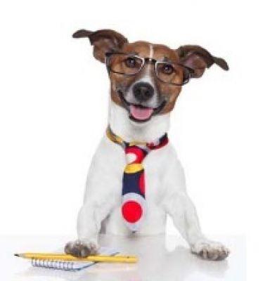 Hundefutter bei Hunde-herzl.de