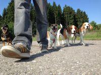 Hundeschule Satke bei München - Hundeausbildung durch Ruhe, Klarheit, Liebe und gegenseitigem Respekt