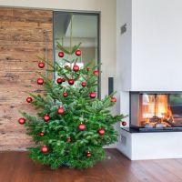 gabari Bio-Weihnachtsbaum Classic