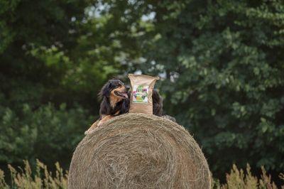 Rundum gut versorgt mit insektenbasiertem Hundefutter von Tenetrio (© Janine Techow)