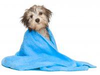 Hund baden