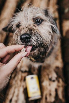 Hypoallergenes Hundefutter von Tenetrio auf Insektenbasis (© Dajana Naas)