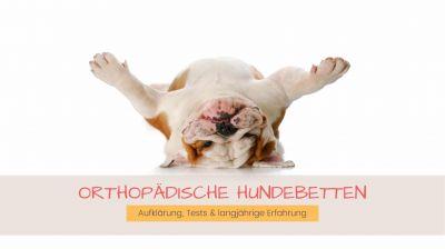 Orthopädisches Hundebett für einen gesunden Schlaf