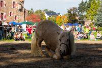 Equitage auf Burg Satzvey. Quelle: Mario Kaspers