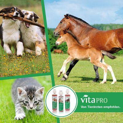 Vita pro für Katzen, Pferde und Hunde