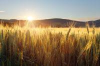 Ackerland - Die Anlageklasse mit Zukunft