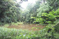 Umfangreiche Renaturierungsmassnahmen sind für Plantagen von Life Forestry eine Selbstverständlichkeit. Bild: Life Forestry