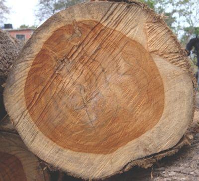 Investieren in den Klimaschutz: Holz bindet langfristig Kohlendioxid. Bild: Life Forestry