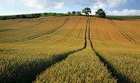 Agrarfeld; Foto: Western Potash
