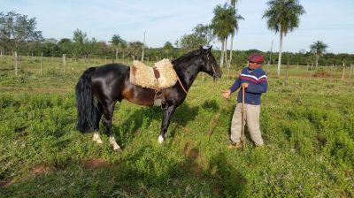 Gauchos betreuen die Rinderherden der Rinca GmbH in Paraguay - damit der Ertrag stimmt.