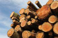 Sale & Lease Back für die Forstwirtschaft