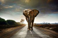 Tembo Gold meldet sich mit starkem Kurssprung zurück