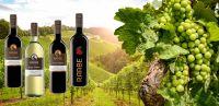 Von Riesling bis Dornfelder - Weingut Raabe produziert excellente Weine